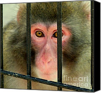 Monkeys Canvas Prints - Feelings Canvas Print by Karen Wiles
