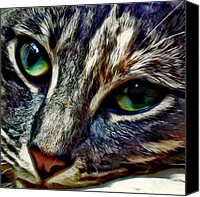 Animals Canvas Prints - Feline Face Canvas Print by David G Paul
