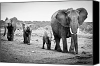 Family Canvas Prints - Female African Elephant Canvas Print by Cedric Favero