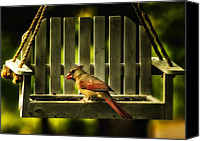 Bird On Feeder Canvas Prints - Female Cardinal in Evening Light Canvas Print by Bill Tiepelman