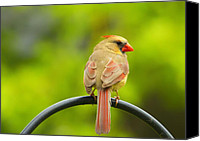 Bird On Feeder Canvas Prints - Female Cardinal on Pole Canvas Print by Bill Tiepelman