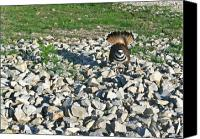 Killdeer Canvas Prints - Female Killdeer Protecting Nest Canvas Print by Douglas Barnett