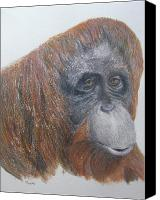Orangutan Painting Canvas Prints - Female Orangutan Canvas Print by Barbara Moore