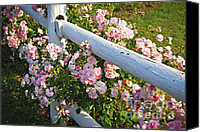House Canvas Prints - Fence with pink roses Canvas Print by Elena Elisseeva