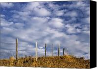 Barbed Wire Fences Photo Canvas Prints - Fenceline In Pasture With Cumulus Canvas Print by Darwin Wiggett