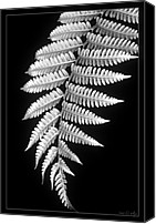 Closeup Canvas Prints - Fern Dance Canvas Print by Holly Kempe