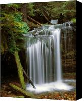 Idaho Canvas Prints - Fern Falls Canvas Print by Leland Howard