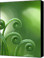 Natural Pattern Photo Canvas Prints - Fern In Forest Canvas Print by © Machel Spence