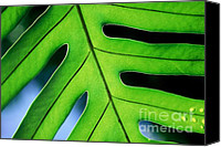 Ranjini Kandasamy Canvas Prints - Fern Canvas Print by Ranjini Kandasamy