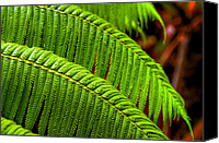 Rainforest Canvas Prints - Fern Canvas Print by Ryan Wyckoff