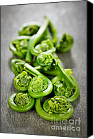 Vegetarian Canvas Prints - Fiddleheads Canvas Print by Elena Elisseeva