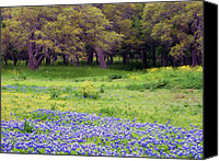 Texas Bluebonnets Canvas Prints - Field of Blues Canvas Print by Bill Morgenstern