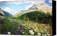 Camping Canvas Prints - Field of daisies and wild flowers Canvas Print by Sandra Cunningham