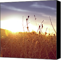 Dry Canvas Prints - Field Of Dry Grass At Sunset Canvas Print by Fran Efless © aveceshagofotos.com