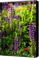 Lupines Canvas Prints - Field of Flowers 4 Canvas Print by Madeline Ellis