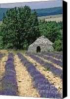 Traveller Canvas Prints - Field of lavender. Sault Canvas Print by Bernard Jaubert
