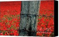 Wooden Post Canvas Prints - Field of poppies with a wooden post. Canvas Print by Bernard Jaubert