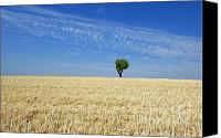 Olive Oil Canvas Prints - Field of wheat in Provence Canvas Print by Bernard Jaubert