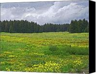 Mountain Scenes Canvas Prints - Field of Yellow Canvas Print by Ernie Echols