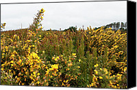 Mendocino Coast Canvas Prints - Fields of Gold Canvas Print by Lorraine Devon Wilke