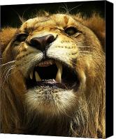 Lion Canvas Prints - Fierce Canvas Print by Wade Aiken