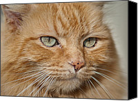 Critter Canvas Prints - Fierce Warrior Kitty Canvas Print by Greg Nyquist