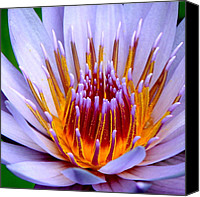 Lotus Art Canvas Prints - Fiery Eloquence Canvas Print by Karon Melillo DeVega