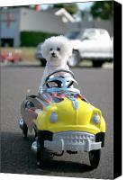 Michael Ledray Canvas Prints - Fifi goes for a ride Canvas Print by Michael Ledray