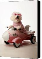Michael Ledray Canvas Prints - Fifi is ready for take off in her rocket car Canvas Print by Michael Ledray