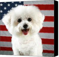 Michael Ledray Canvas Prints - Fifi Loves America Canvas Print by Michael Ledray