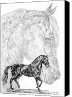 Horse Drawings Canvas Prints - Fine Steps - Paso Fino Horse Print Canvas Print by Kelli Swan