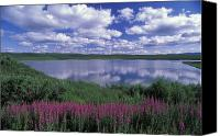 Denali Canvas Prints - Fireweed, Lake And Clouds Reflecting Canvas Print by Rich Reid
