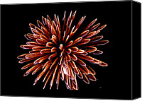 Pyrotechnics Canvas Prints - Fireworks Canvas Print by Magrath Photography
