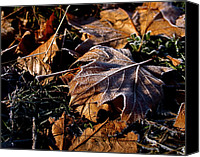 Fall Canvas Prints - First Frost Canvas Print by Rona Black