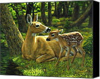 Deer Canvas Prints - First Spring Canvas Print by Crista Forest