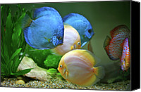 Sea Animals Canvas Prints - Fish In Water Canvas Print by Vietnam