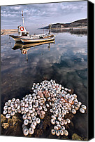 Finny Canvas Prints - Fishing - 7 Canvas Print by Okan YILMAZ