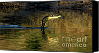 Catfish Canvas Prints - Fishing Cormorant Canvas Print by Robert Frederick