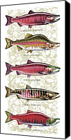 Rocks Painting Canvas Prints - Five Salmon Species  Canvas Print by JQ Licensing