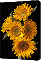 Yellows Canvas Prints - Five sunflowers Canvas Print by Garry Gay