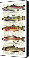 Flyfishing Canvas Prints - Five Trout Panel Canvas Print by JQ Licensing