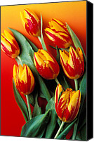 Unusual Photo Canvas Prints - Flame tulips Canvas Print by Garry Gay