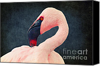 Red Cross Mixed Media Canvas Prints - Flamingo Canvas Print by Angela Doelling AD DESIGN Photo and PhotoArt