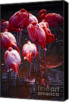 Zoo Canvas Prints - Flamingo Canvas Print by Elena Elisseeva