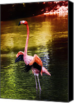 Saint Louis Canvas Prints - Flamingo Flow Canvas Print by Bill Tiepelman