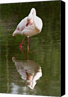 Lake Canvas Prints - Flamingo Canvas Print by Gert Lavsen