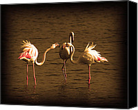 Long Pyrography Canvas Prints - Flamingos Argue Canvas Print by Radoslav Nedelchev