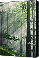 Forest Canvas Prints - Fleeting Beams Canvas Print by Evgeni Dinev