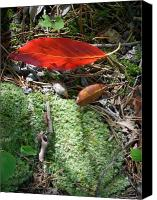 Forest Floor Canvas Prints - Floating Leaf Canvas Print by Beebe  Barksdale-Bruner