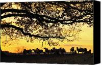 Family Farm Canvas Prints - Flock at Sunrise Canvas Print by Thomas R Fletcher